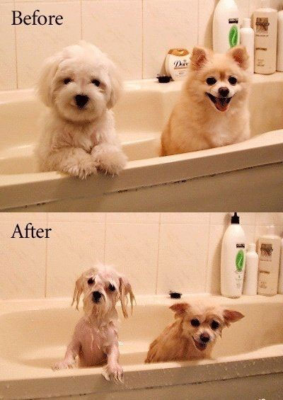Wet_dogs