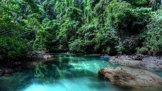 Rainforest-costa-rica-trees-rocks-forest-america-s-716050